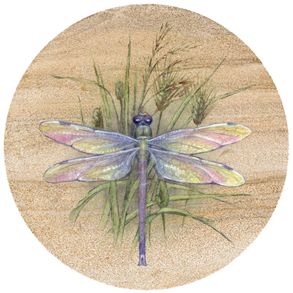 Dragonfly sandstone coaster by thirstystone - Stone absorbent coasters ...