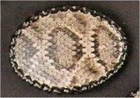 Rattlesnake skin hand laced belt buckle from Tombstone, AZ