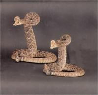 Stuffed Rattlesnake with striking head from Silver Hills Trading Company, Tombstone Arizona